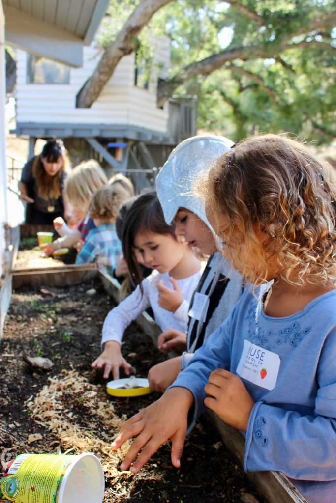Seed to Table at MUSE School